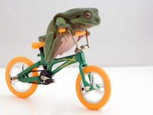 A frog riding a tiny bicycle