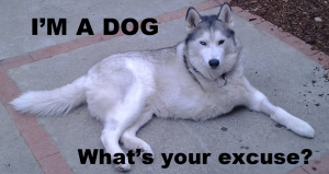 A husky with missing its front right leg laying down with text I'm a dog, what's your excuse